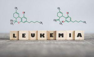 CBD маслото и левкемията
