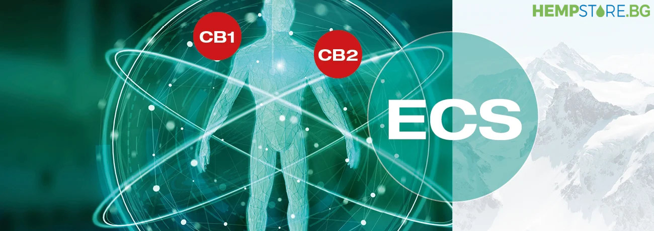 CBD и ендоканабидоидната система